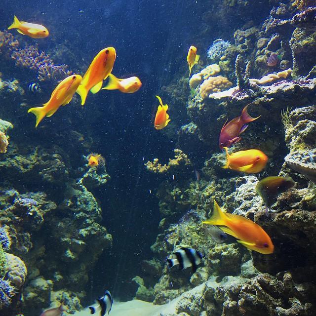 Fische sind Freunde, …